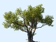 Tree Animated 3d model