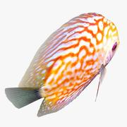 Animação Discus Fish 2 3d model