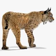 Bobcat truqué 3d model