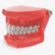 台风牙齿模型3D 3d model