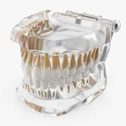 Transparent Dental Typodont Teeth Model 3d model