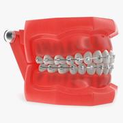 Typodont Teeth Model with Brackets 3D模型 3d model