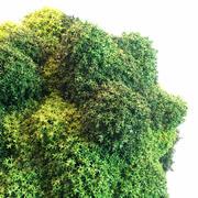 Moss Set 3d model