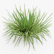 Ciuffo d'erba 3d model