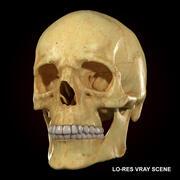 Modèle 3D de crâne et de dents de crâne réaliste et modèle 3D de sculpture 3d model
