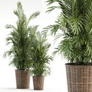 Växtsamling 93 3d model