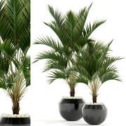 Plants collection 95 3d model