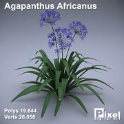 Agapanthus Africanus 3d model