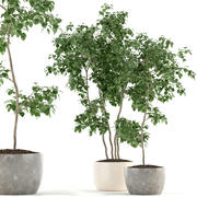 Bitkiler koleksiyonu 96 3d model