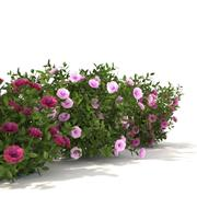 Collection of peonies 3d model