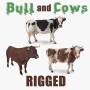 Collection de taureaux et vaches gréés 3d model