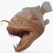 Fiskare fisk riggad 3d model