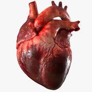 인간의 심장 해부학 (애니메이션) 3d model
