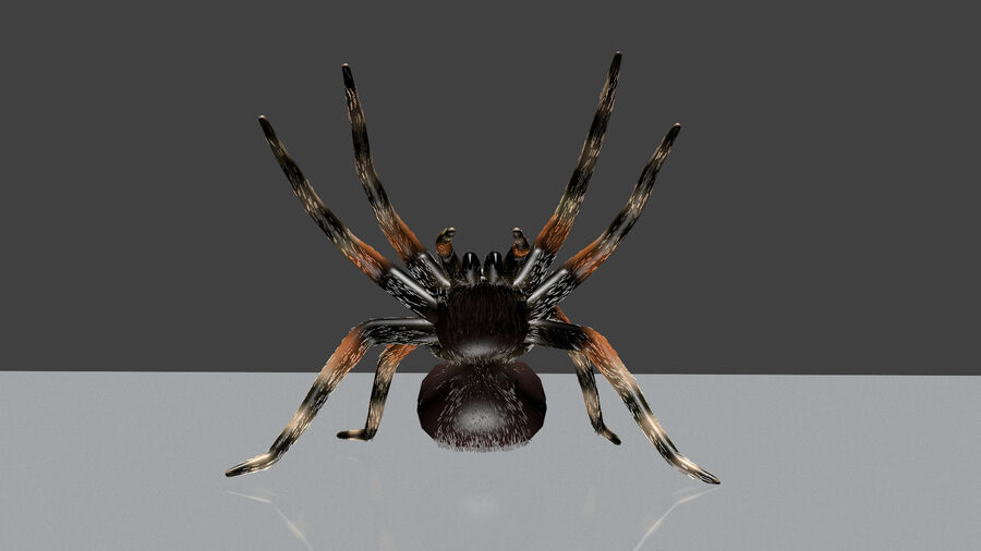 Spider-tarantula (Theraphosidae) royalty-free 3d model - Preview no. 11