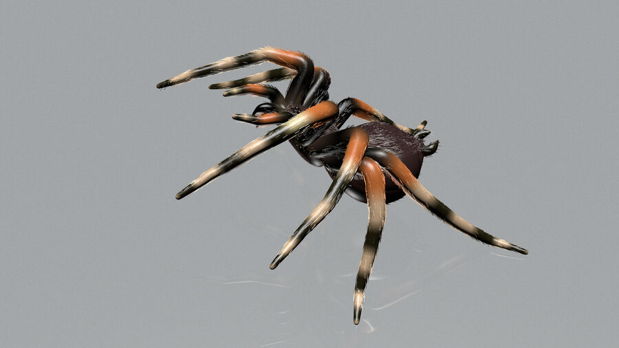 Spider-tarantula (Theraphosidae) royalty-free 3d model - Preview no. 3