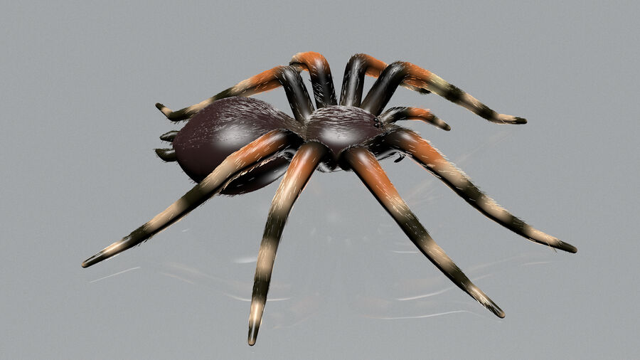 Spider-tarantula (Theraphosidae) royalty-free 3d model - Preview no. 2