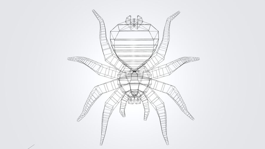 Spider-tarantula (Theraphosidae) royalty-free 3d model - Preview no. 15