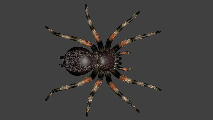 Spider-tarantula (Theraphosidae) royalty-free 3d model - Preview no. 10