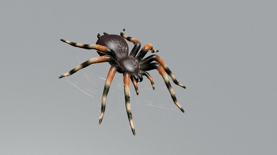 Spider-tarantula (Theraphosidae) royalty-free 3d model - Preview no. 12