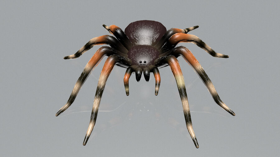 Spider-tarantula (Theraphosidae) royalty-free 3d model - Preview no. 7