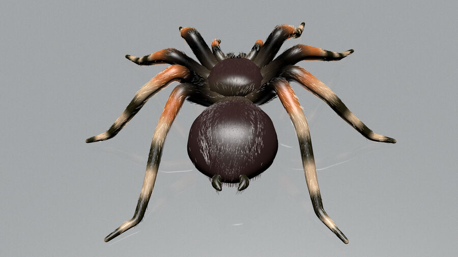 Spider-tarantula (Theraphosidae) royalty-free 3d model - Preview no. 6