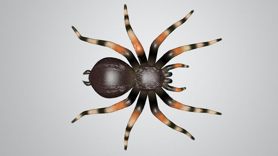 Spider-tarantula (Theraphosidae) royalty-free 3d model - Preview no. 5