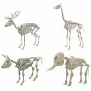 Djur skelett samling 3d model