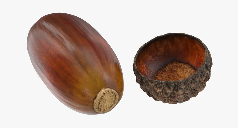 Single Acorn royalty-free 3d model - Preview no. 6