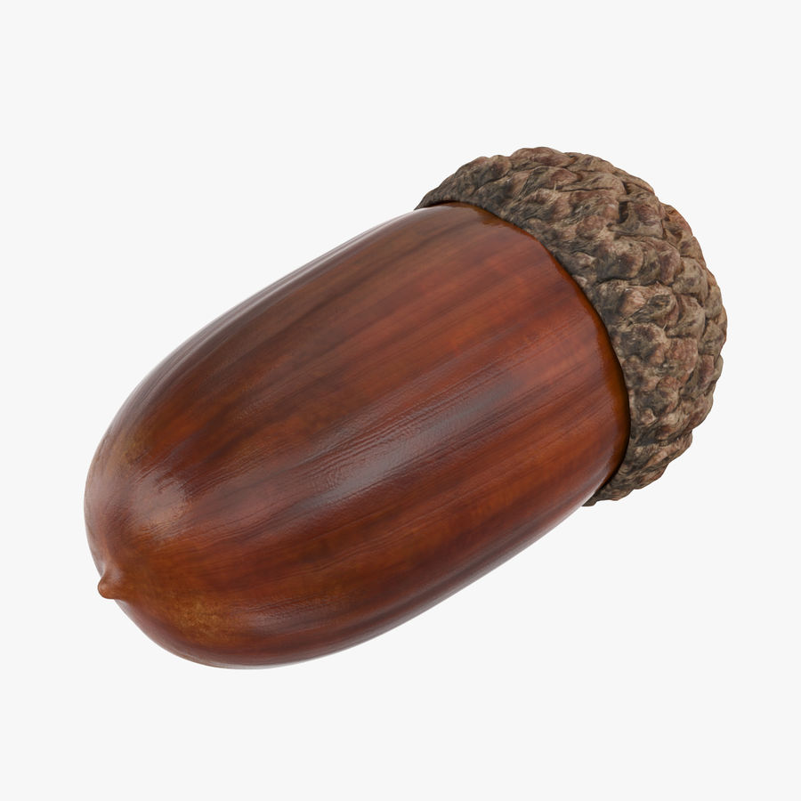 Single Acorn royalty-free 3d model - Preview no. 1