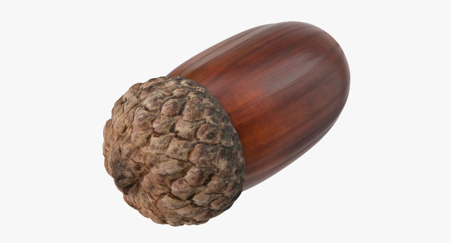 Single Acorn royalty-free 3d model - Preview no. 5