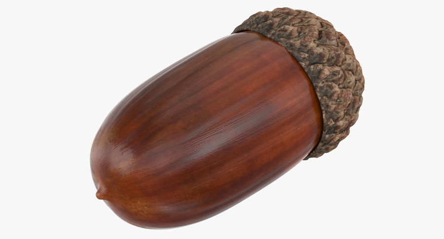 Single Acorn royalty-free 3d model - Preview no. 2