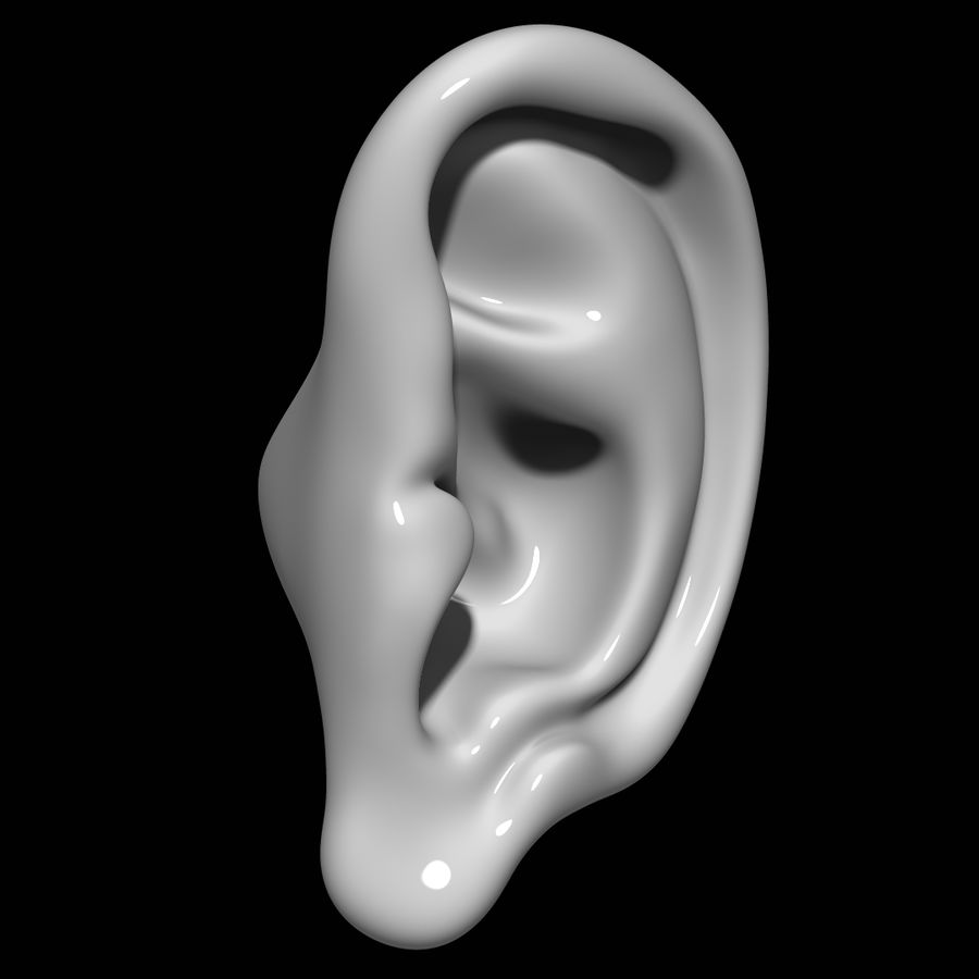Oreille royalty-free 3d model - Preview no. 2