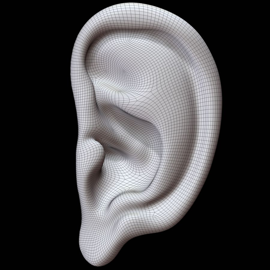 Oreille royalty-free 3d model - Preview no. 8