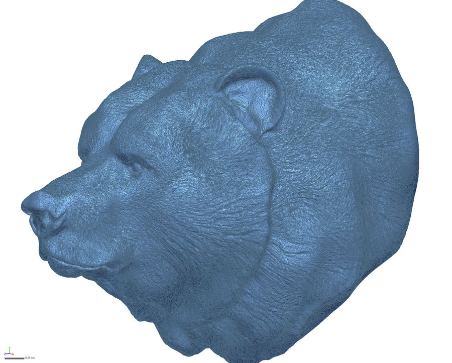 Cabeça de urso pardo royalty-free 3d model - Preview no. 6
