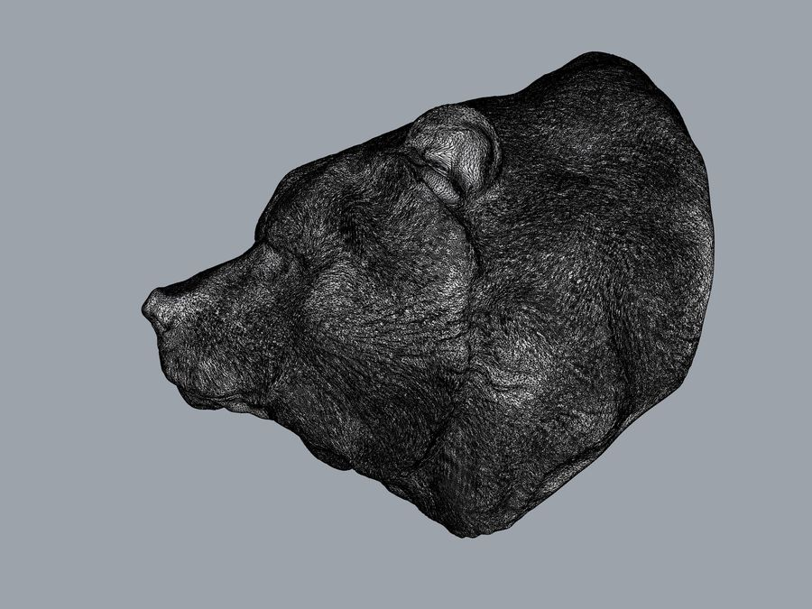 Cabeça de urso pardo royalty-free 3d model - Preview no. 5