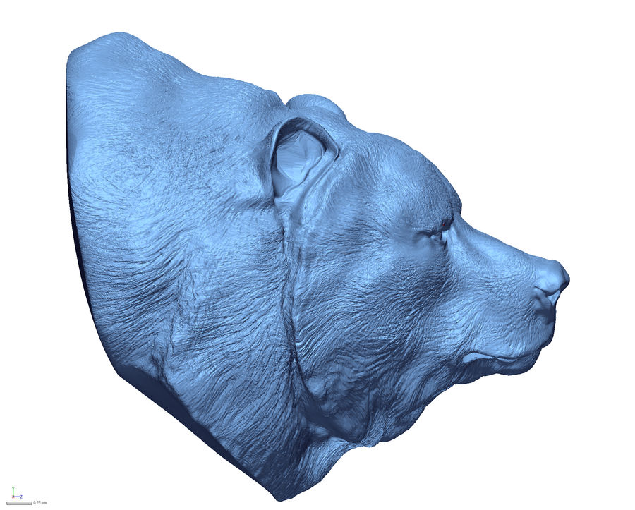 Cabeça de urso pardo royalty-free 3d model - Preview no. 3
