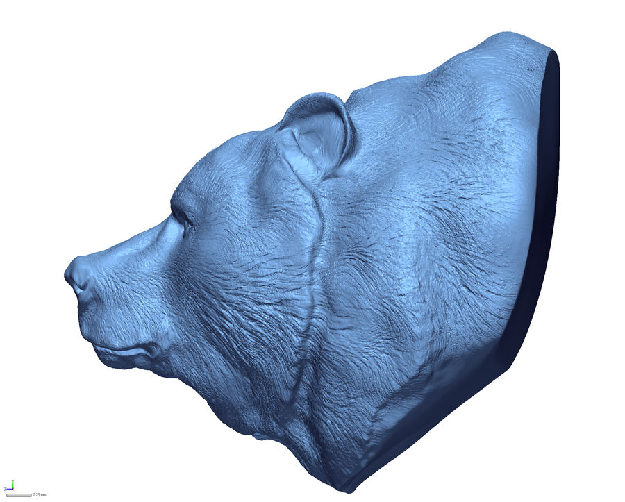 Cabeça de urso pardo royalty-free 3d model - Preview no. 4
