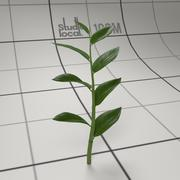葉を持つ植物の茎 3d model