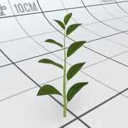 Caule de plantas com folhas 3d model
