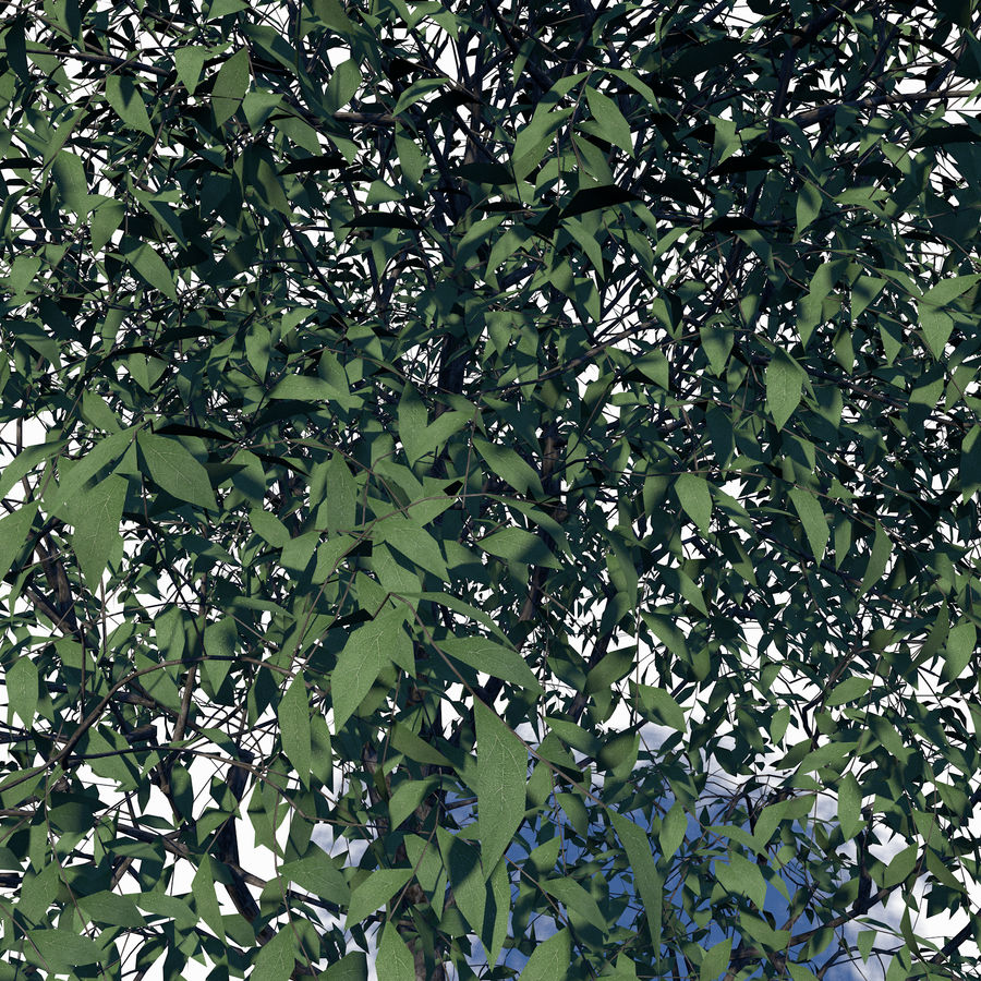 Árbol de hoja caduca royalty-free modelo 3d - Preview no. 4