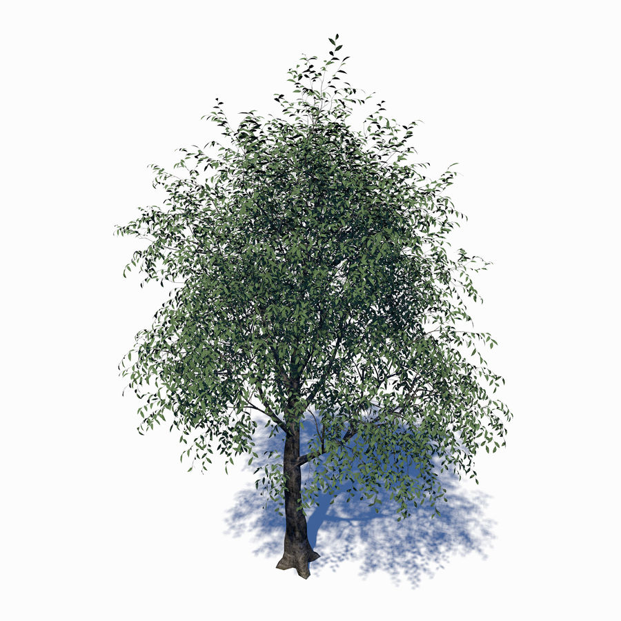 Árbol de hoja caduca royalty-free modelo 3d - Preview no. 1