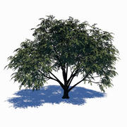 Hartriegel-Baum 3d model