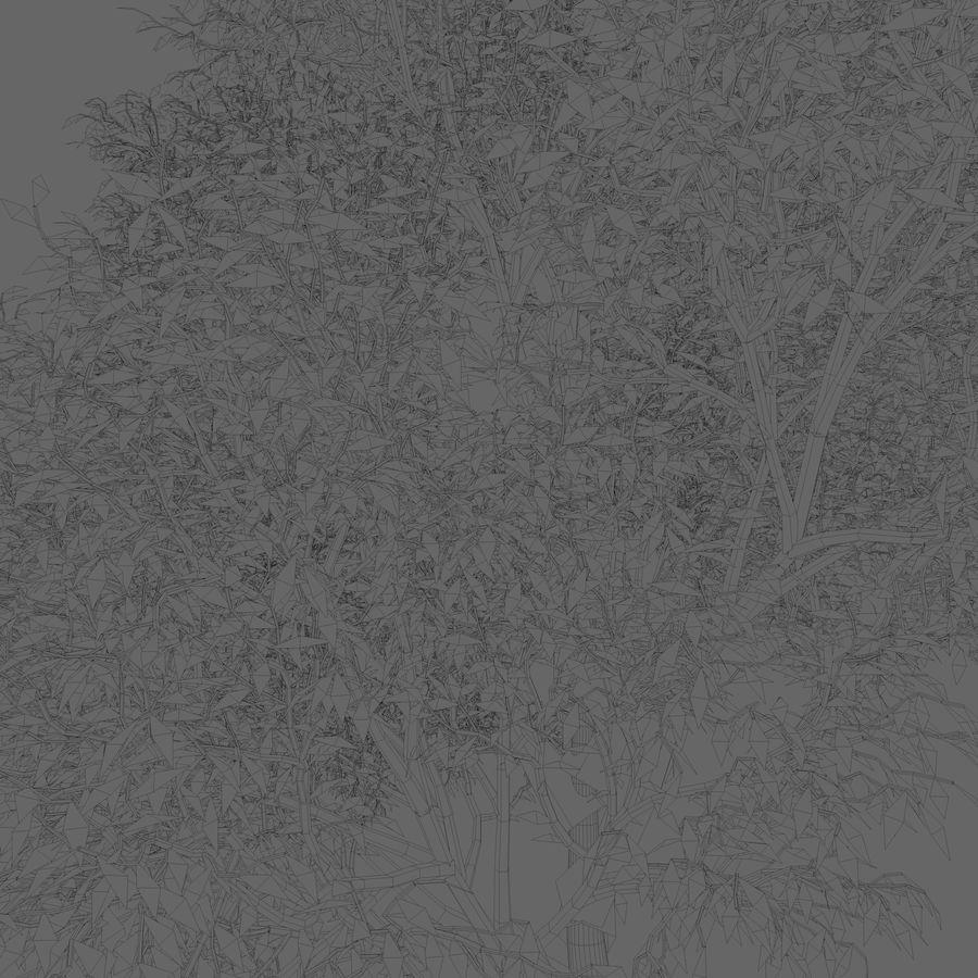 Árbol de hoja caduca royalty-free modelo 3d - Preview no. 6