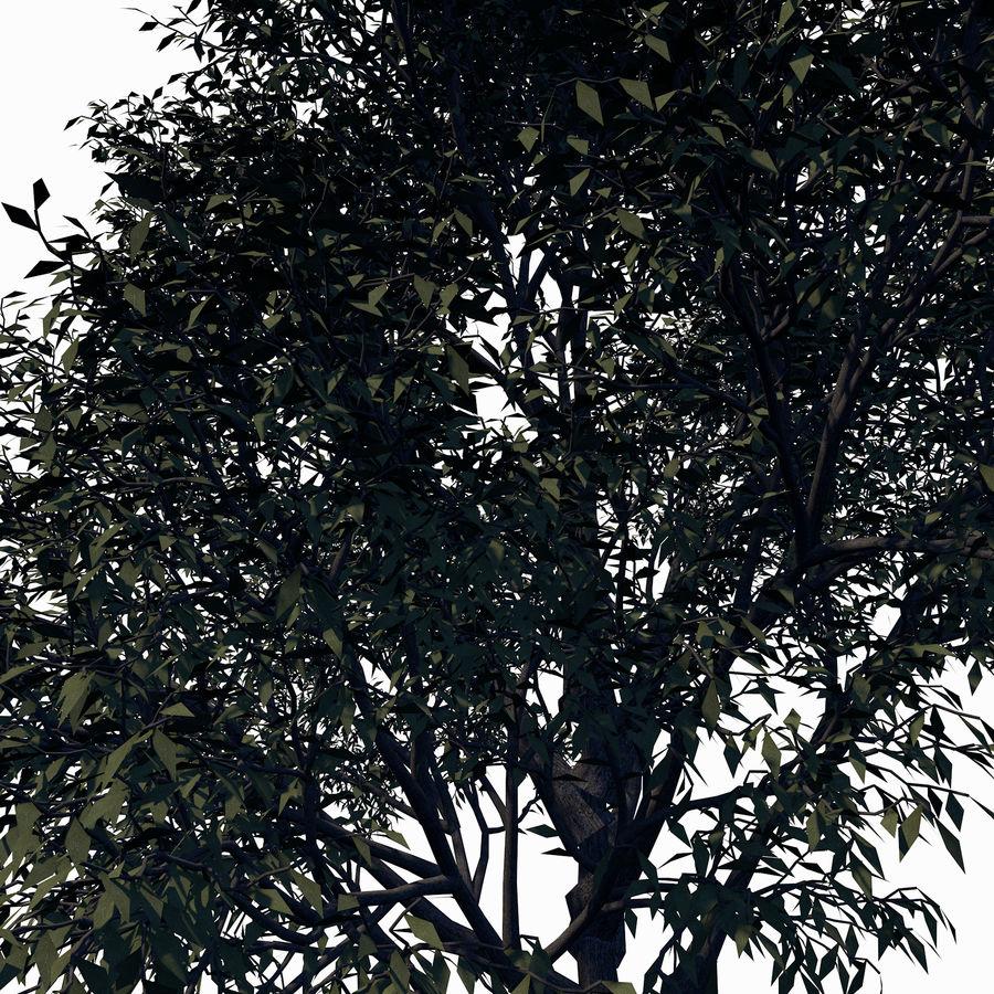 Árbol de hoja caduca royalty-free modelo 3d - Preview no. 5