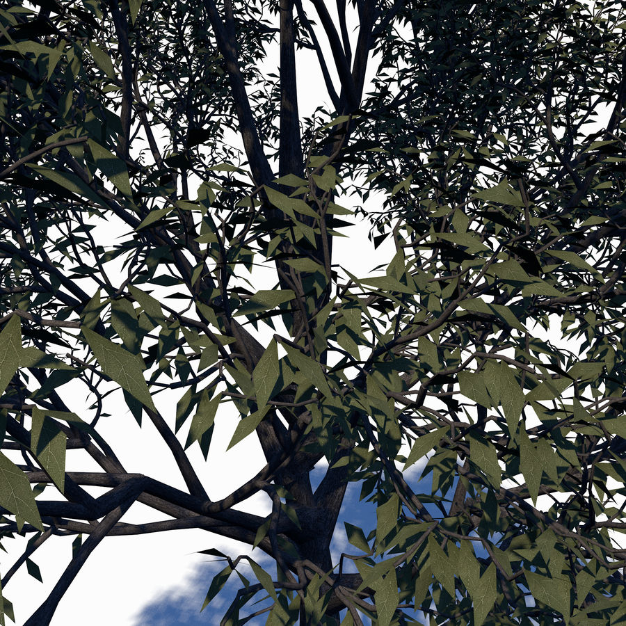 Árbol de hoja caduca royalty-free modelo 3d - Preview no. 3