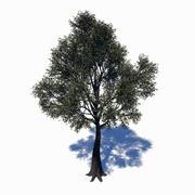 落叶树 3d model