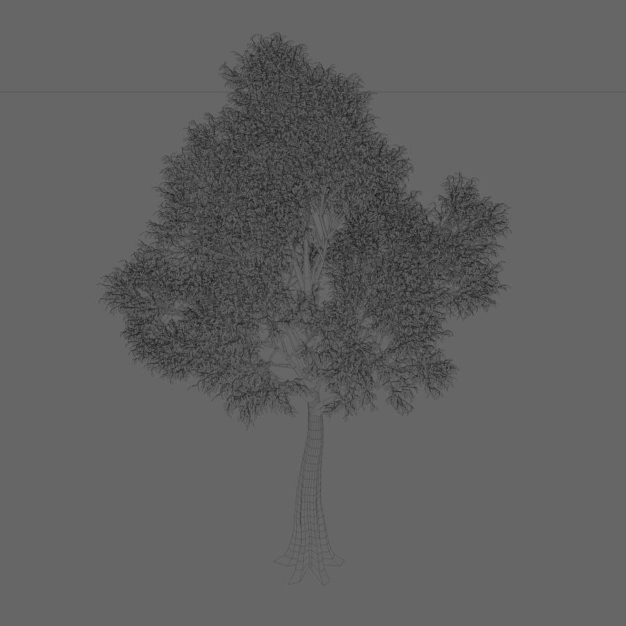 Árbol de hoja caduca royalty-free modelo 3d - Preview no. 2