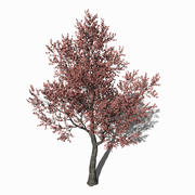Arbre feuille rose 3d model