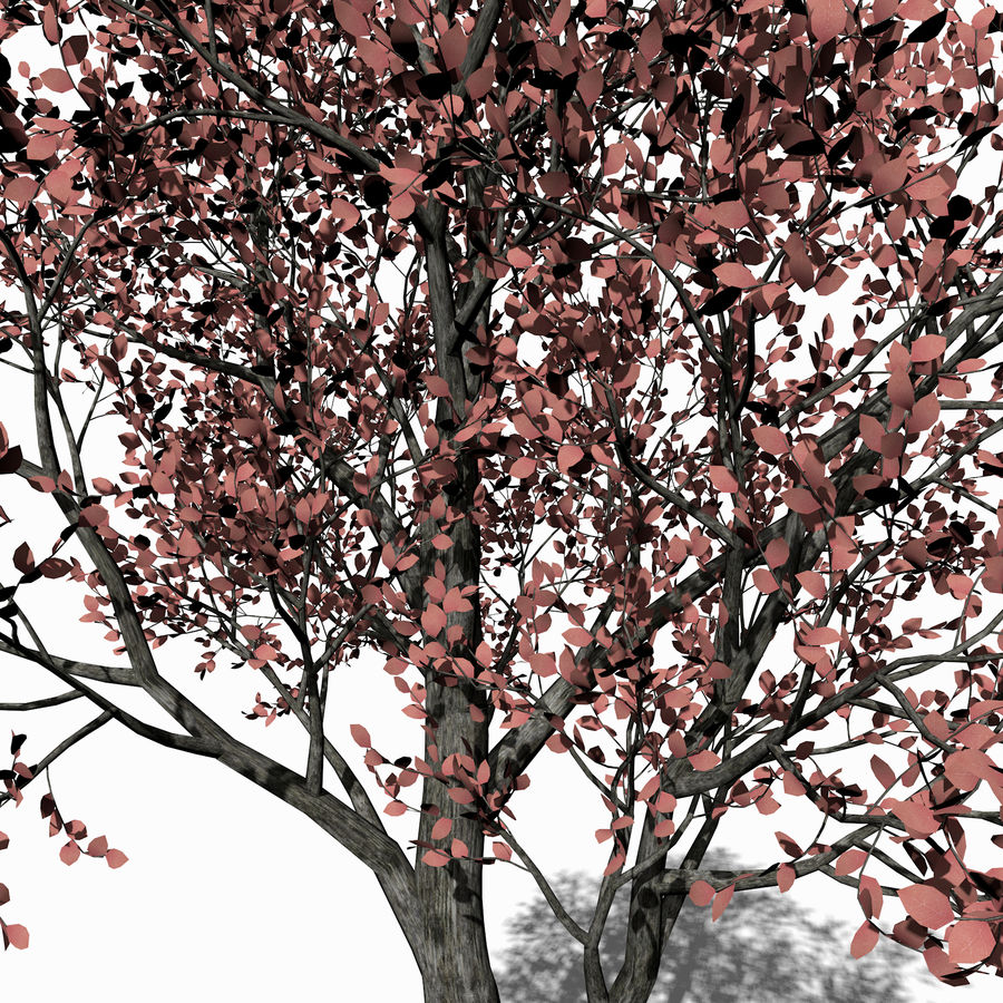 Albero foglia rosa royalty-free 3d model - Preview no. 5
