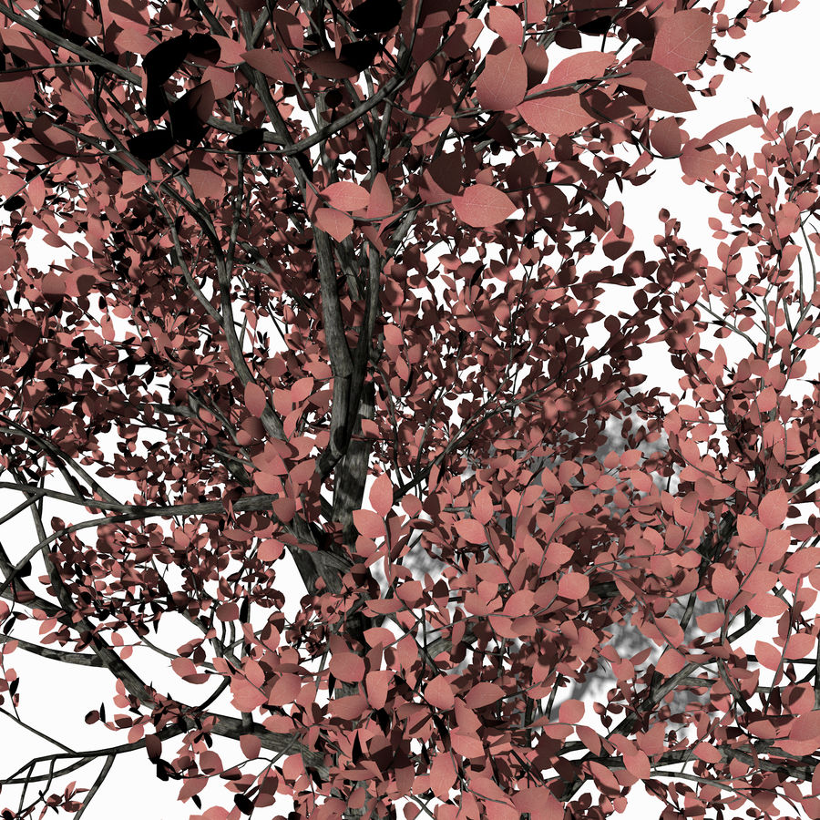 Albero foglia rosa royalty-free 3d model - Preview no. 3